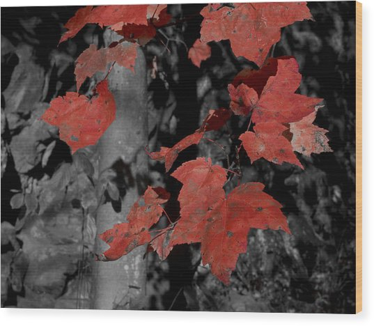 Fall Foliage In Pennsylvania Wood Print by Bob Hahn