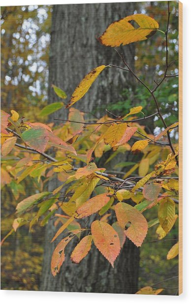 Fall Foliage Wood Print by JAMART Photography