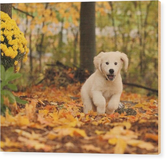 Fall Frolic  Wood Print