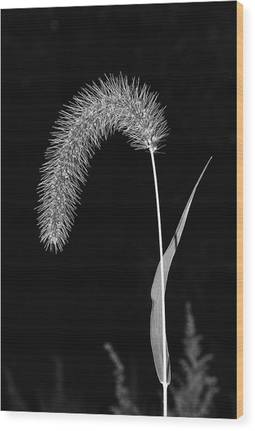 Fall Grass 1 Wood Print