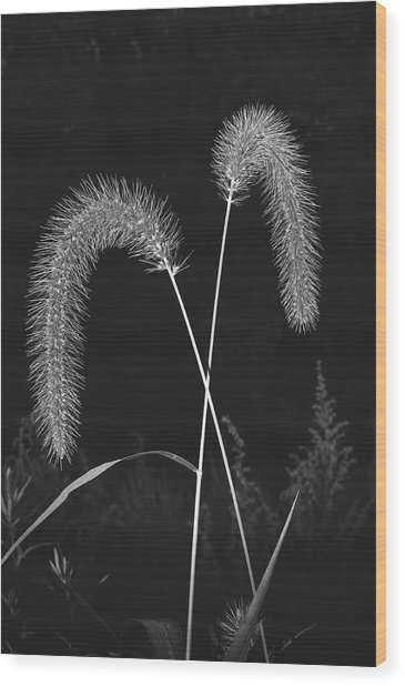 Fall Grass 2 Wood Print
