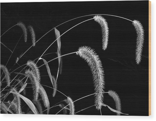 Fall Grass 3 Wood Print