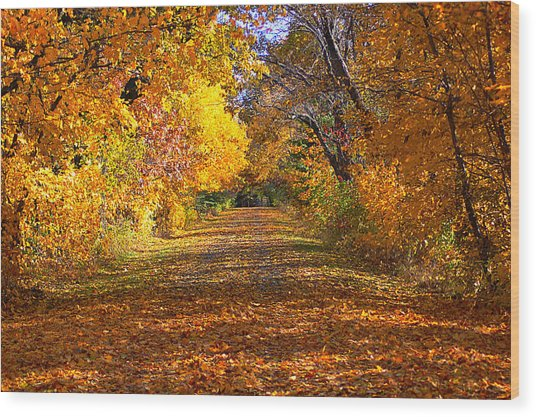Fall Wood Print by Gwen Allen