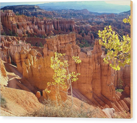 Fall In Bryce Canyon Wood Print