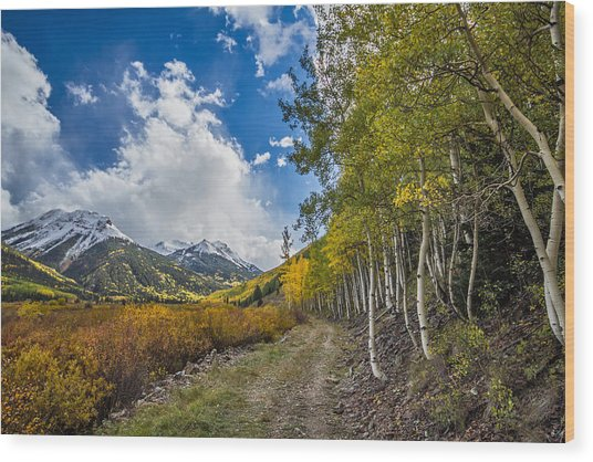 Wood Print featuring the photograph Fall In Colorado by Wesley Aston