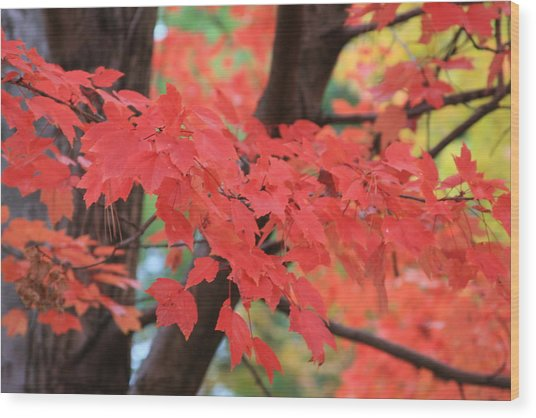 Fall In Red Wood Print