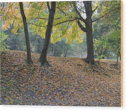 Fall In Stony Brook Wood Print by Raju Alagawadi