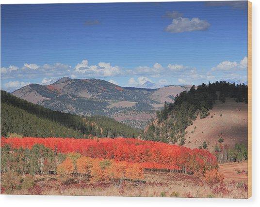 Fall In  Ute Trail  Wood Print