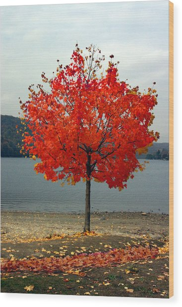 Fall Is Here Wood Print by Dennis Curry