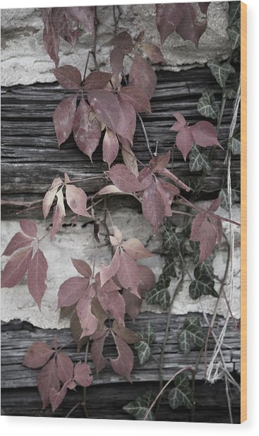 Fall Ivy Wood Print