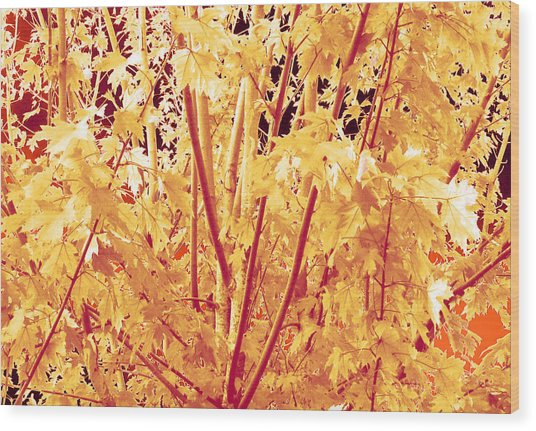 Fall Leaves #1 Wood Print