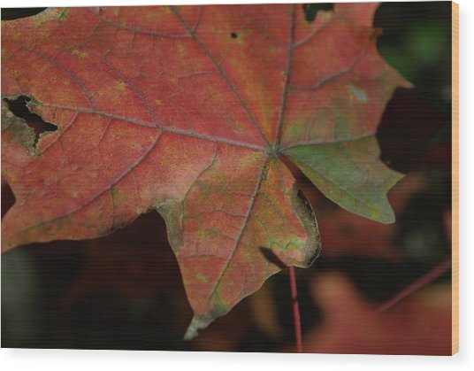Fall Leaves 1 Wood Print by Eric Workman