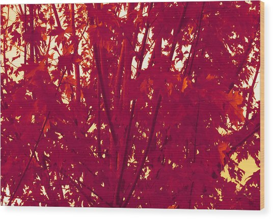 Fall Leaves #2 Wood Print