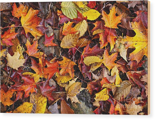 Fall Leaves On Forest Floor Wood Print