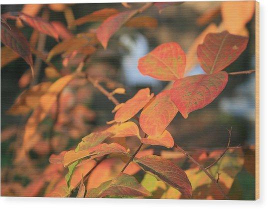 Fall Leaves Wood Print by Linda Ebarb