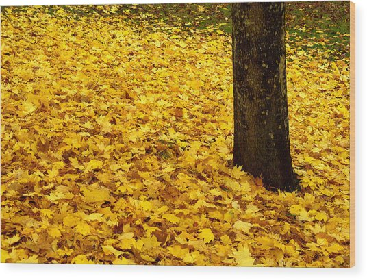 Fall Leaves Wood Print by Val Jolley