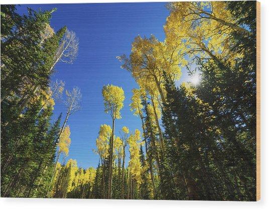 Fall Light Wood Print