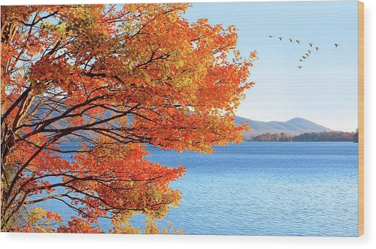 Fall Maple Tree Graces Smith Mountain Lake, Va Wood Print