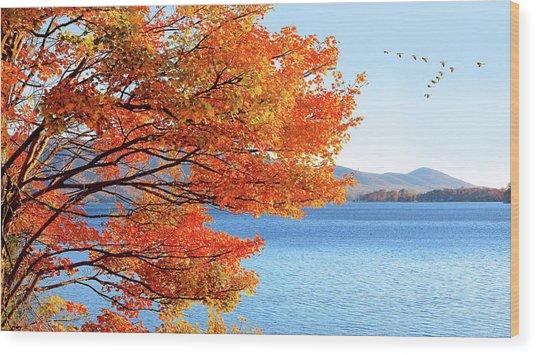 Fall Maple Tree Graces Smith Mountain Lake, Va Wood Print