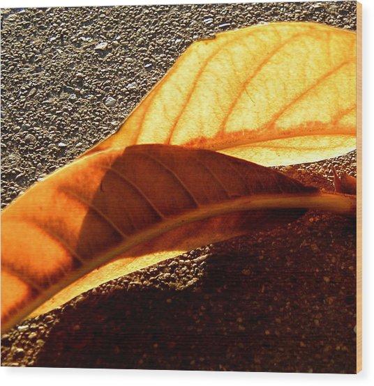Fall Wood Print by Mark Stevenson