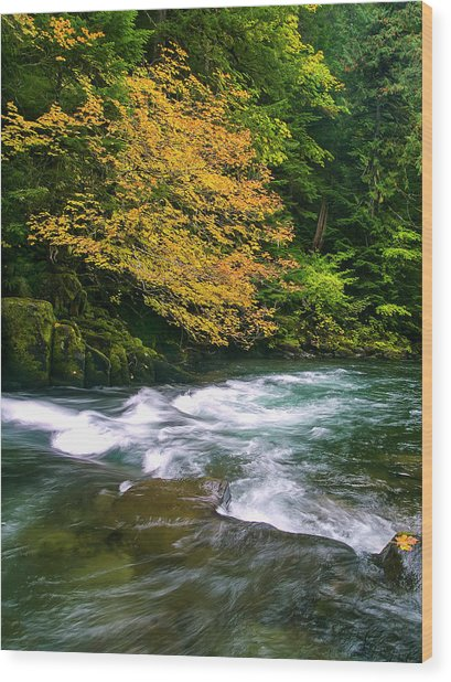 Fall On The Clackamas River, Or Wood Print