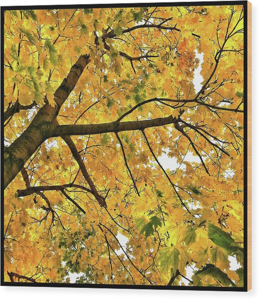 Fall On William Street Wood Print