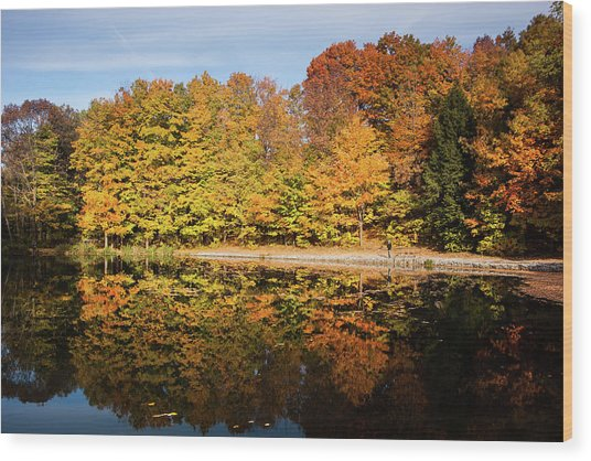 Fall Ontario Forest Reflecting In Pond  Wood Print