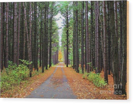Fall Pines Road Wood Print