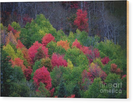 Fall Poppers Wood Print