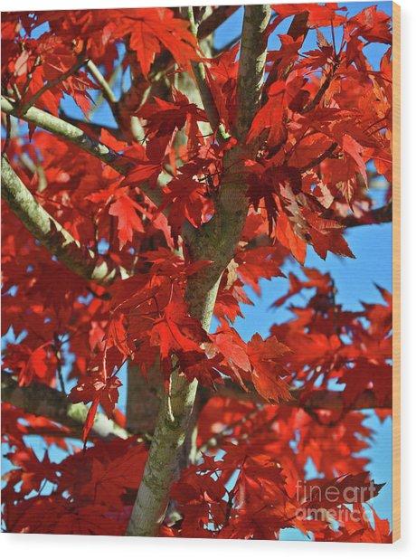 Fall Stars Wood Print