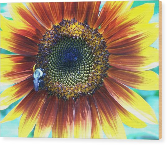 Fall Sunflower Wood Print by Vijay Sharon Govender