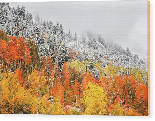 Fall To Winter Canvas Print, Photographic Print, Art Print, Framed Print, Greeting Card, Iphone Case Wood Print