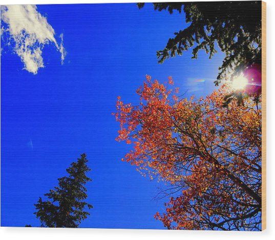Wood Print featuring the photograph Fall Up by Karen Shackles