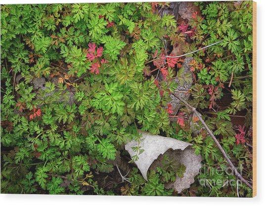 Fallen #2 Wood Print