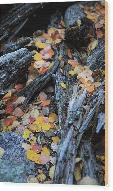 Fallen Wood Print