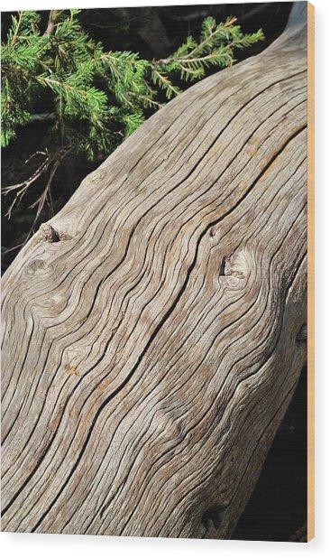 Fallen Fir Wood Print