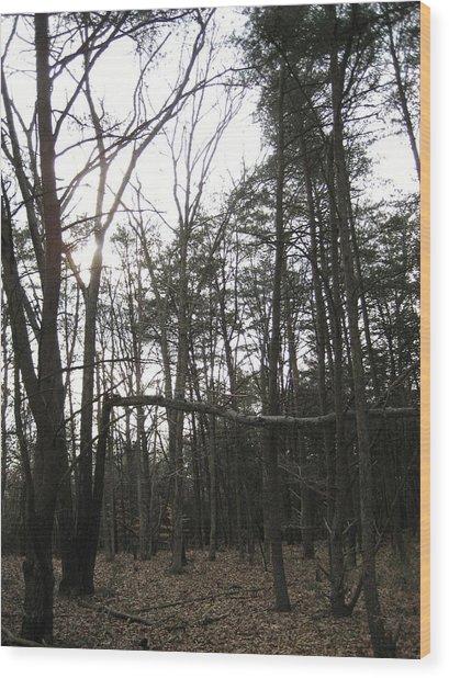 Fallen Giant Wood Print by Jennifer  Sweet