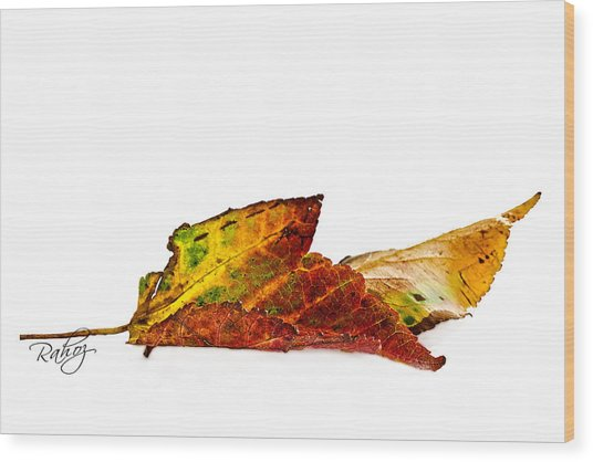 Fallen In Fall  Wood Print by Rahat Iram