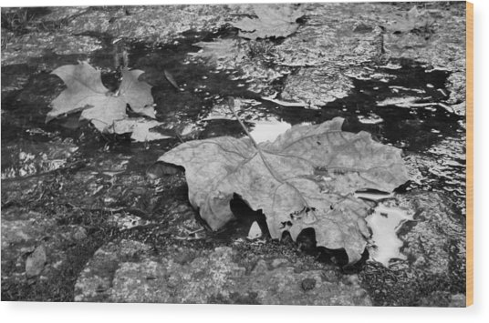 Fallen Leaves Wood Print by Andre Panatto