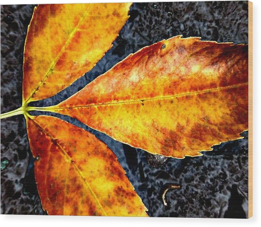 Fallen Leaves Wood Print by Beth Akerman