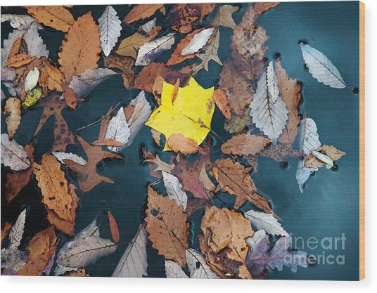 Fallen Leaves Wood Print by Hideaki Sakurai