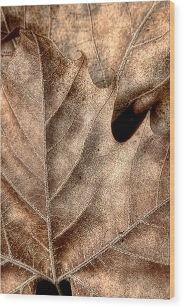 Fallen Leaves II Wood Print