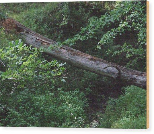 Fallen Log Wood Print by Michael L Kimble