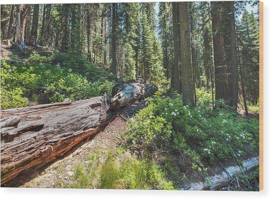 Fallen Tree- Wood Print