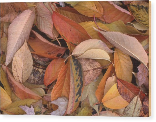 Falling Leaves On The Ground Wood Print by Lyle Crump