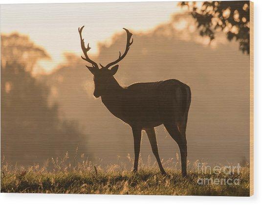 Fallow Deer At Sunrise Wood Print