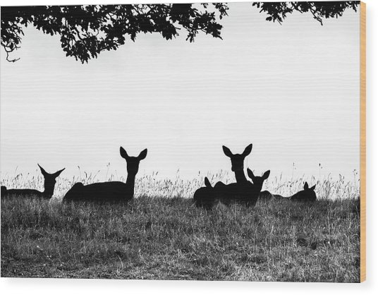 fallow Deer Wood Print by Yorkshire In Colour