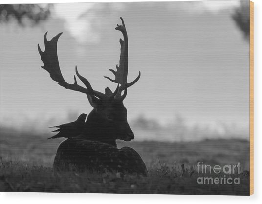 Fallow Deer With Friend - Black And White Wood Print