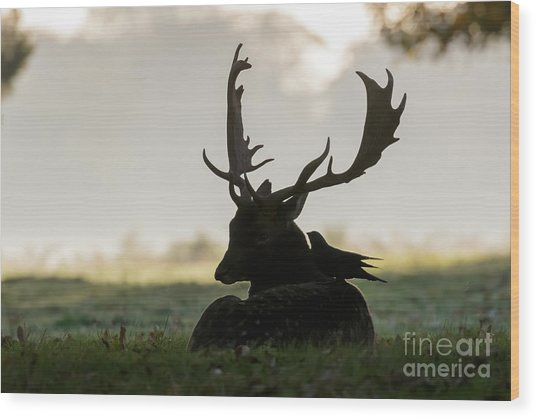 Fallow Deer With Friend Wood Print