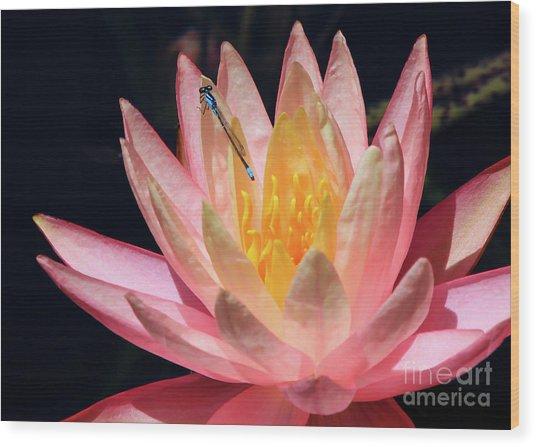 Familiar Bluet Damselfly And Lotus 2 Wood Print